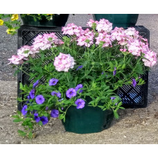 12inch Mixed Hanging Baskets