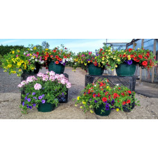 12inch Mixed Coloured Calibrachoa Hanging Basket